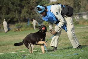 Mine detecting dogs to take on Afghanistan's enemy
