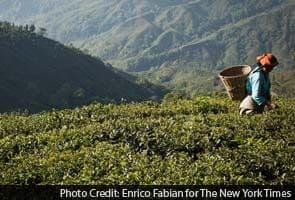 Darjeeling tea growers get protection from European Union