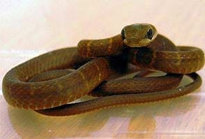 Snake on a plane forces emergency landing
