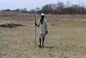Maharashtra drought: fields parched