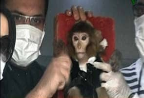 US concerned over Iran reportedly sending monkey into space