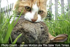 That cuddly kitty is deadlier than you think