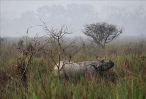 India use drones to protect rhinos from poachers