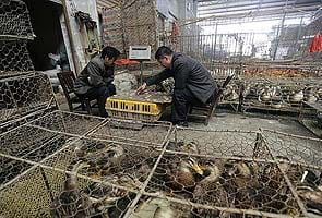 China confident it can control bird flu outbreak