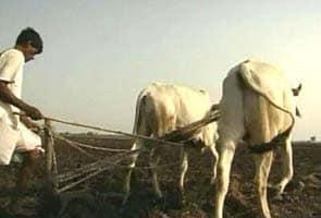 मनरेगा की स्टेटस रिपोर्ट : असम में 19 दिन, तो पंजाब में 20 दिन मिला रोज़गार