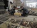 China reports three new bird flu deaths, toll hits 35