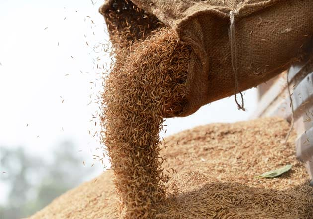 Cabinet Approves Distribution Of Free Foodgrains To Poor Till November