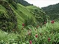 Uttarakhand: No visitors to Valley of Flowers this season