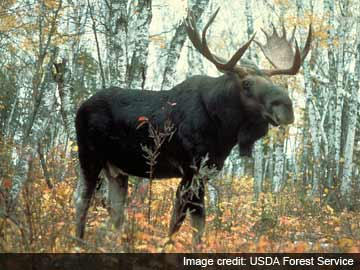 Moose milk? UN food agency says yes please