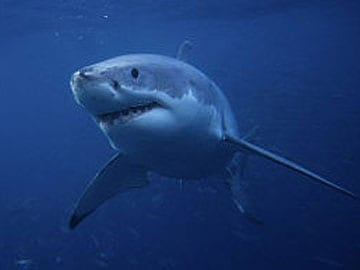 Christmas Day swimmer bitten by shark in New Caledonia
