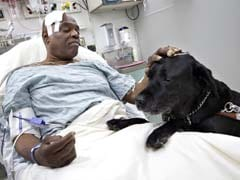 Hero dog saves blind man after a fall on subway track