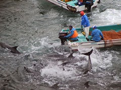 Fishermen kill 30 more dolphins in Japan: activists