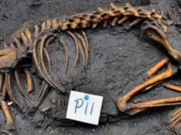 Aztec dog burial site found in Mexico City