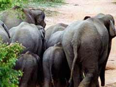 Three elephants killed as train runs into herd in Assam