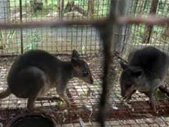 Large cache of smuggled exotic animals seized in Philippines
