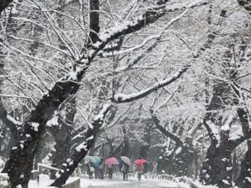 Snow storm hits Japan again, grounds over 100 flights