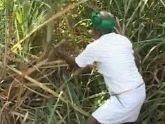 किसानों की ख़ुदकुशी पर बोले कृषिमंत्री, ये कलयुग है सतयुग नहीं