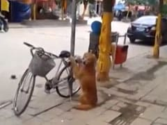 Dog guards owner's bike... see what happens when he returns