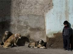 Claims 100 stray dogs buried alive in China probed
