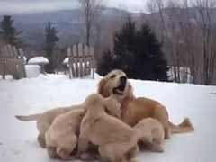 You Don't Need a Reason to Watch These Adorable Puppies Playing