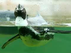 Unusual New Penguin Flu Found in Antarctica