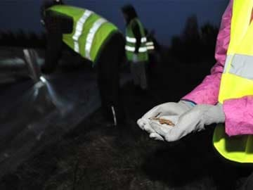 How Did Estonia's Frogs Cross the Road?