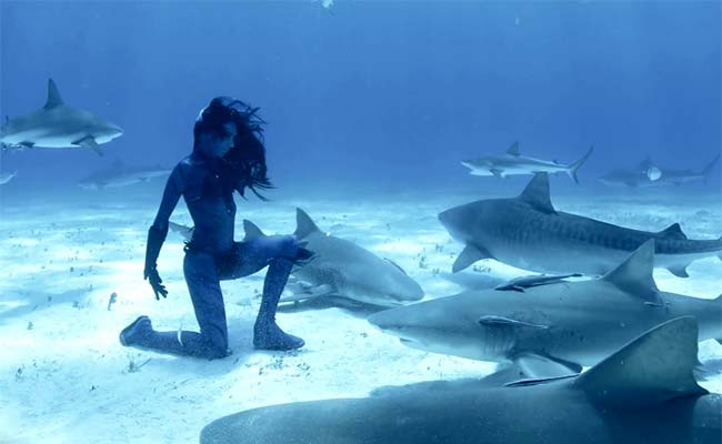 World First Real Life Mermaid Dances Underwater With Tiger Sharks