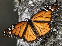 Salting Roads Cuts Through Snow and Lives Short For Butterflies: Study