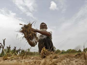 Government Considering Contingency Plans to Deal With Poor Rain