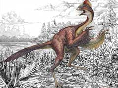 Dinosaur-Era Flying Reptiles Were Extremely Social