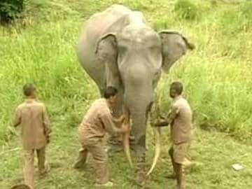 Poachers Kill Famed Giant Kenyan Elephant
