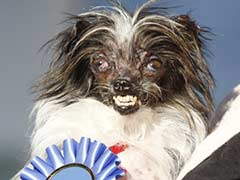 Meet Peanut: The New 'World's Ugliest Dog'