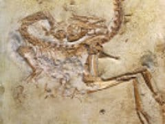 Brain of World's First Known Predator Unearthed