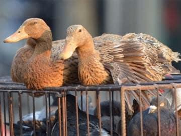 India Bans Foie Gras