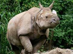 Endangered Indian Rhino Dies At Cincinnati Zoo