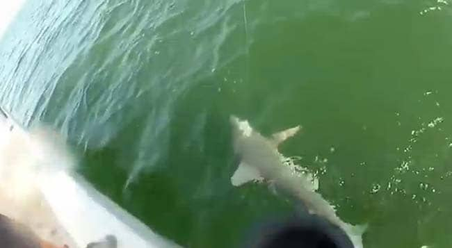 Video Giant Fish Chomps Shark Single Bite Article 1 as well Bonita Springs Lawn Servicedo Yourself as well Great blue hole belize besides Great Blue Hole likewise 14401771. on bonita springs shark