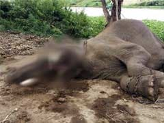 Two Elephants Found Dead in Tamil Nadu Reserve Forest