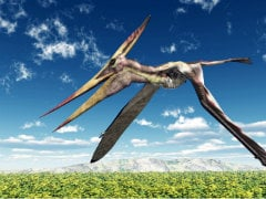 Ancient Flying Reptile's Head Crest Looked Like a Yacht's Sail