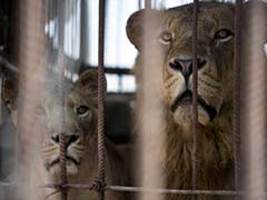 Zoo Animals in Athens at Risk as Crisis Hits Feed Imports