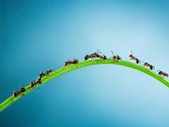 Ants Can Save Earth From Global Warming, Claims Study
