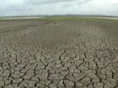 Andhra Pradesh's 'War On Drought' Fails To Save Crop Despite Crores Spent