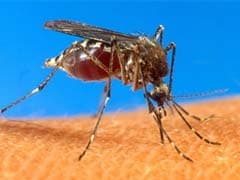 El Salvador says Nearly 30,000 Infected With Mosquito-Borne Chikungunya