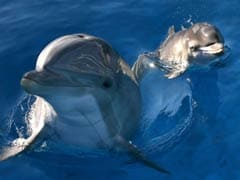 Russia's Military Is Recruiting Dolphins, And Their Mission Is A Mystery