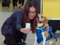 Going Viral: Sherlock is Back and He Now Works For this Airline (Kind of)