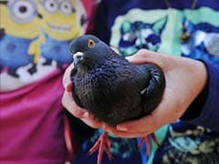 Before National Day Ceremony, China Body-Searches 10,000 Pigeons