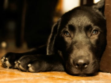 How to Help Your Dog be More Comfy This Diwali