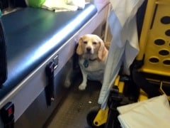Dog Hitches Ride on Ambulance to Be Near Sick Owner