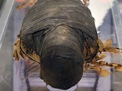 Scientists Work to Conserve 2,500-Year-Old Mummy