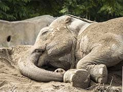 24-Year Old Male Elephant Electrocuted in Tamil Nadu