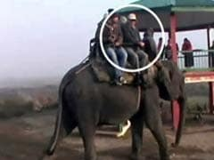As Assam Burned With Violence, State's Top Bureaucrat Enjoyed Elephant Rides